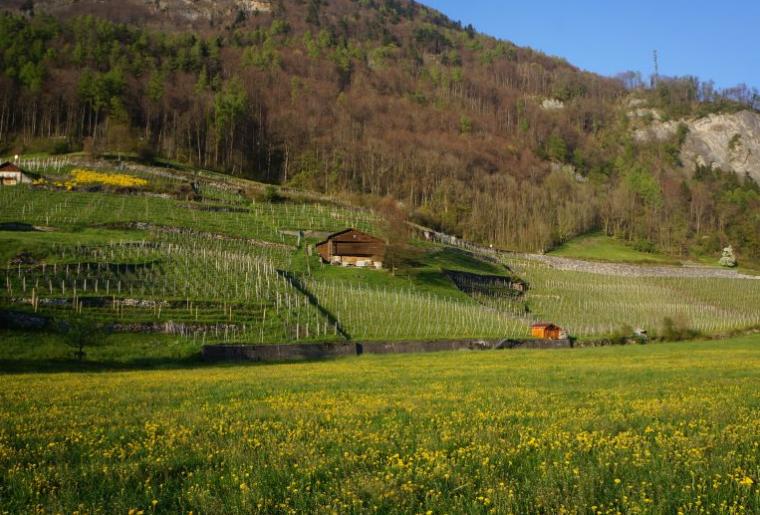 Weinbauweg Sargans Mels.png