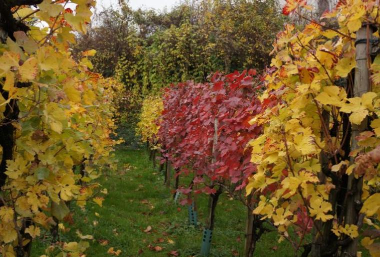 Weinbauweg Sargans Mels 2.png