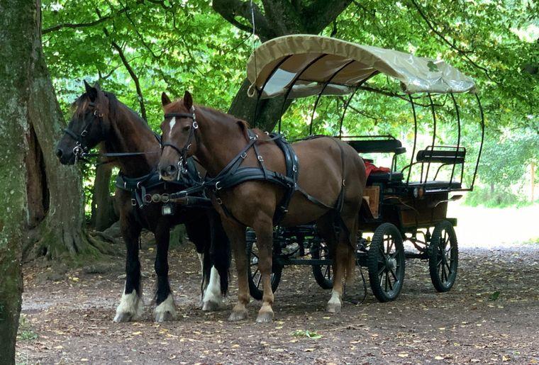Kindergeburtstag mit Pferdekutsche Bachsertal 2.jpg