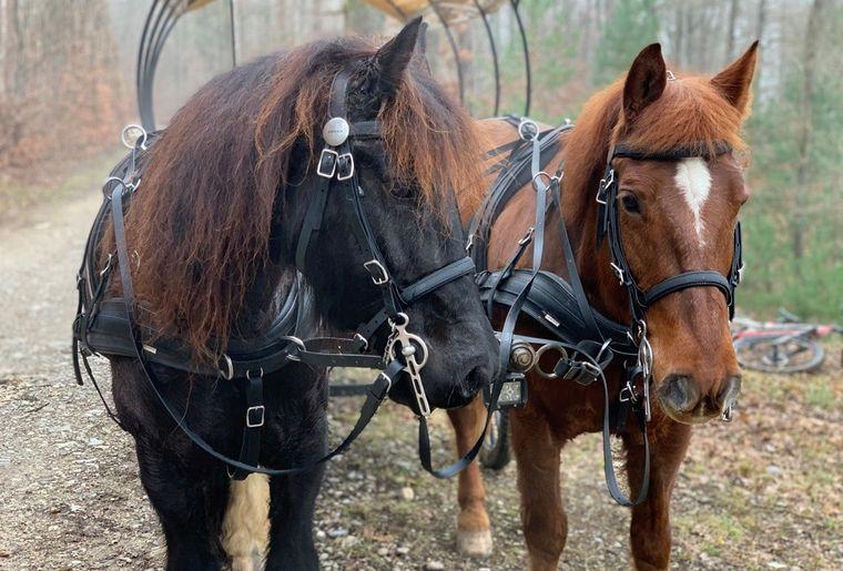 Kindergeburtstag mit Pferdekutsche Bachsertal 3.jpg