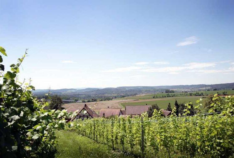 Zürcher Weinland.jpg