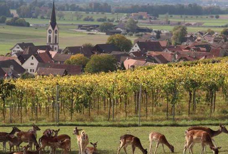 Zürcher Weinland 3.jpg
