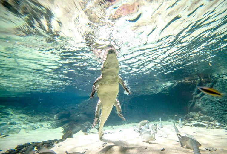 Aquatis-Aquarium-Vivarium-crocodile-du-desert-2-©nuno-acacio-RVB.jpg