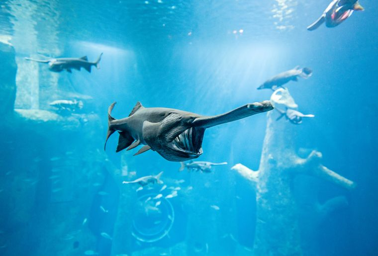 Aquatis-Aquarium-Vivarium-poisson-spatule-©nuno-acacio-RVB.jpg