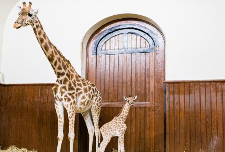 Zoo Basel.jpg