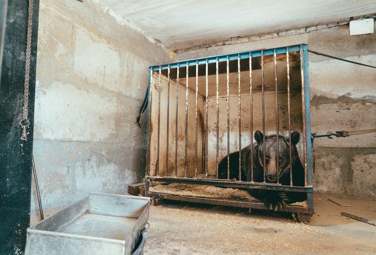 Nicht artgerechte Tierhaltung in der Ukraine Copyright FOUR PAWS Svetlana Dmitrenko.jpg