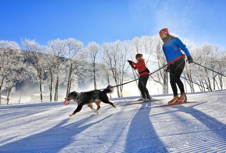 Hundeloipe_Langlauf_Hunde_2_Personen_Winter_Schnee© Foto: Destination Davos Klosters / Marcel Giger.jpg