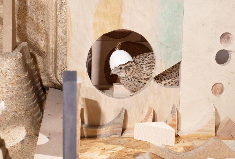 Ausstellung Dunant Plaza Valentina_Minnig_copyright_jpg.jpg