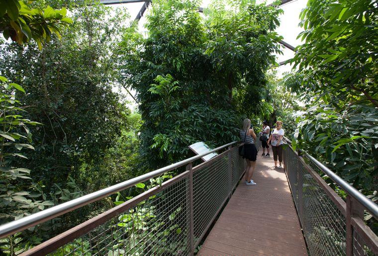 papiliorama-kerzers-chietres-tropical-zoo-papillon-2.jpg