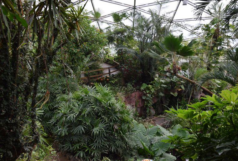 papiliorama-kerzers-chietres-tropical-zoo-papillon-3.JPG