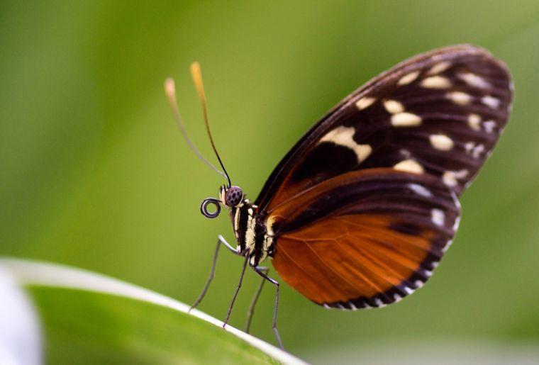 papiliorama-kerzers-chietres-tropical-zoo-papillon-4.jpg