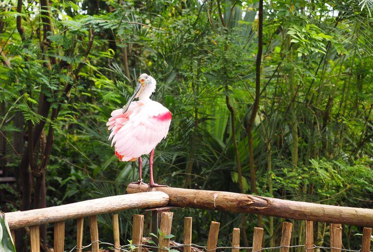 papiliorama-kerzers-chietres-tropical-zoo-papillon-6.JPG