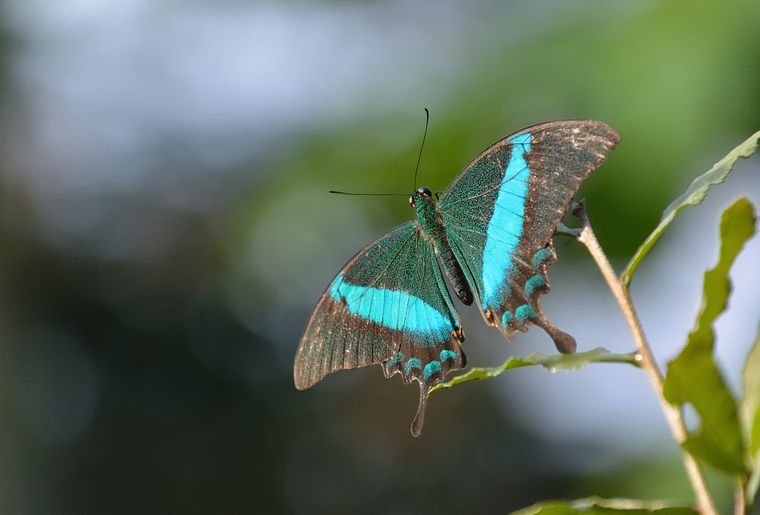 papiliorama-kerzers-chietres-tropical-zoo-papillon-7.jpg