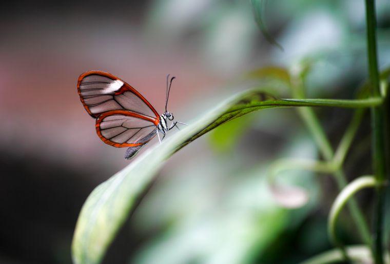 papiliorama-kerzers-chietres-tropical-zoo-papillon-8.JPG
