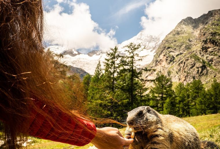 Ausflug nach Saas - Fütterung der Murmeltiere.jpg