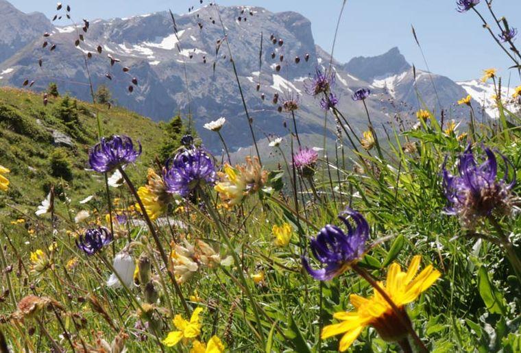Headerbild_Alpenblumenweg_So_2020_web.jpg