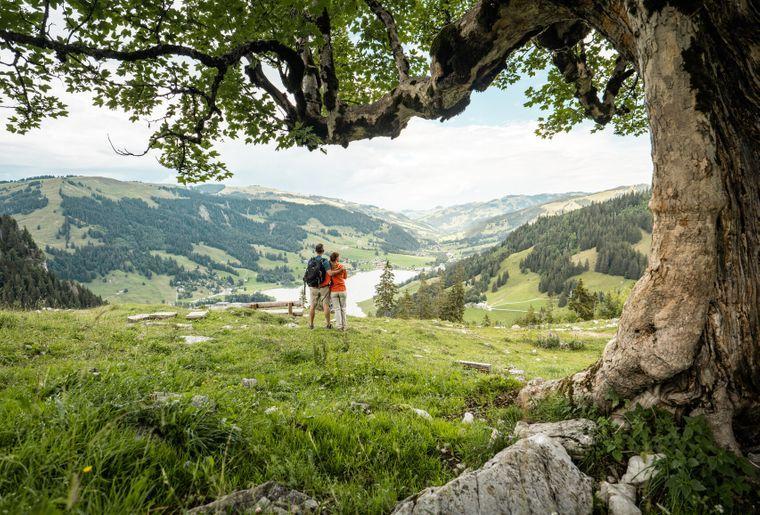 Breccaschlund Fribourg c Pascal Gertschen.jpg