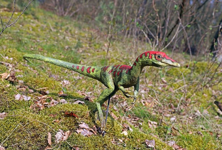 Dino-Zoo 6.jpeg