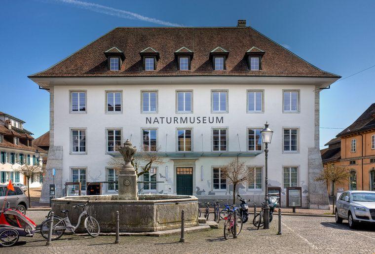 Naturmuseum_Solothurn_Ausstellung_18_Aussen ©Silvan Thüring.jpg