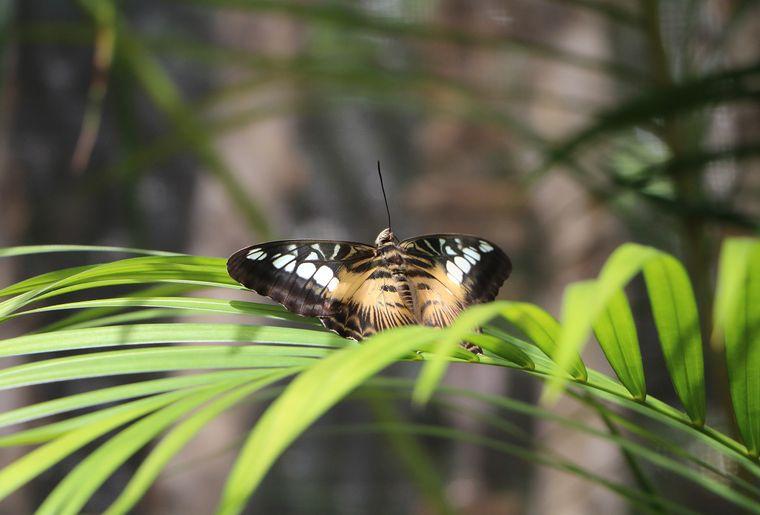 Schmetterlingshaus Raschle 3.jpg