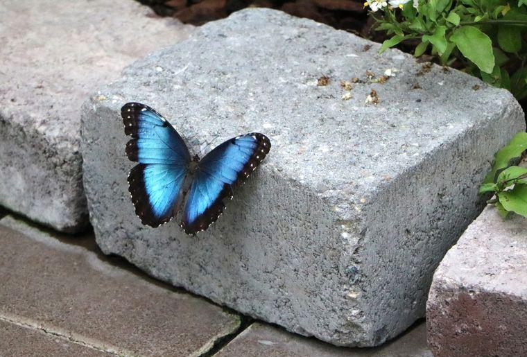 Schmetterlingshaus Raschle 4.jpg