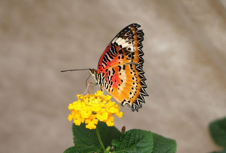 Schmetterlingshaus Raschle 5.jpg