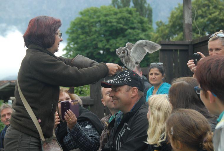 Greifvogelpark Buchs Weissgesichtseuleshow.jpg
