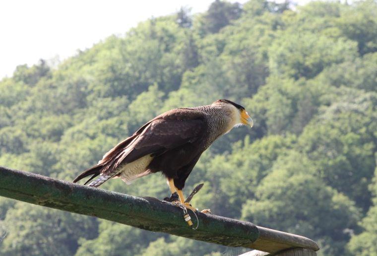 Greifvogelpark Buchs.jpg