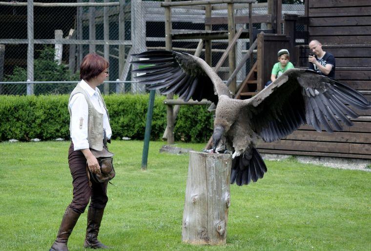 Greifvogelpark Buchs Show.jpg