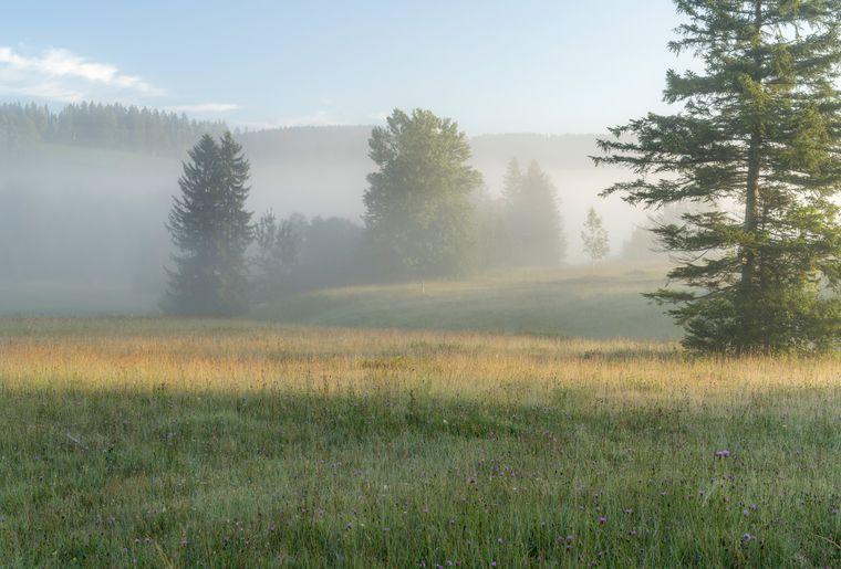 hochmoor-rothenthurm-erlebnisse-erlebnisregion-mythen_5.jpg