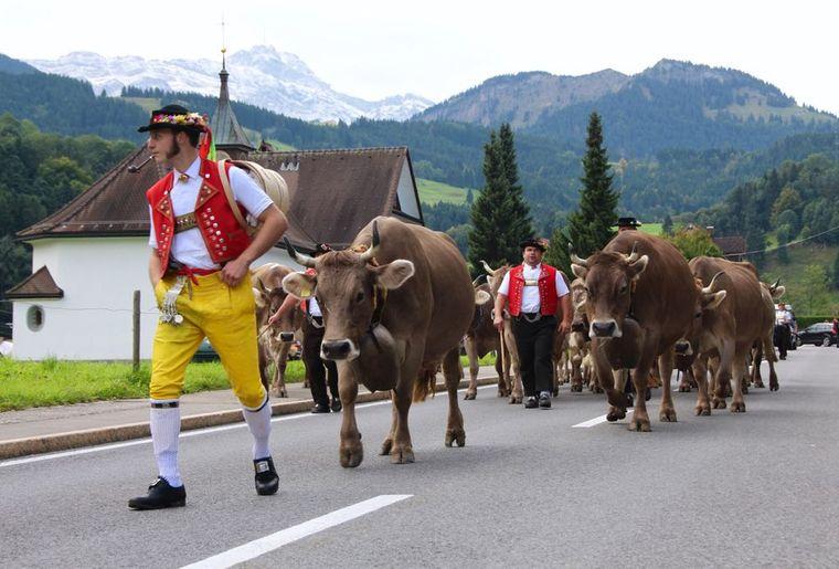 Alpabfahrt Urnäsch.jpg
