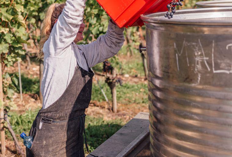 vendange-swiss-wine-7