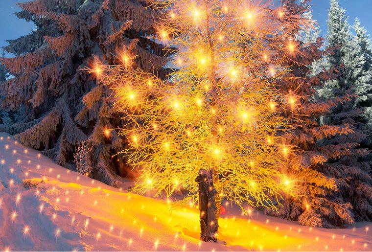 Winter Wonderland Bern.jpg