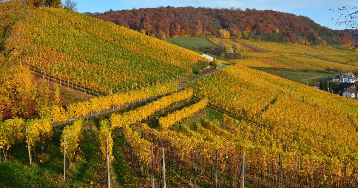 Wein-Wanderweg im Zurzibiet