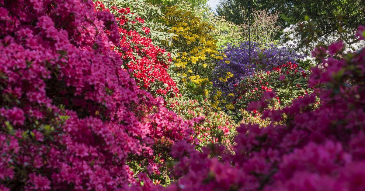 Merian Gärten © Christoph Merian Stiftung, Kathrin Schulthess