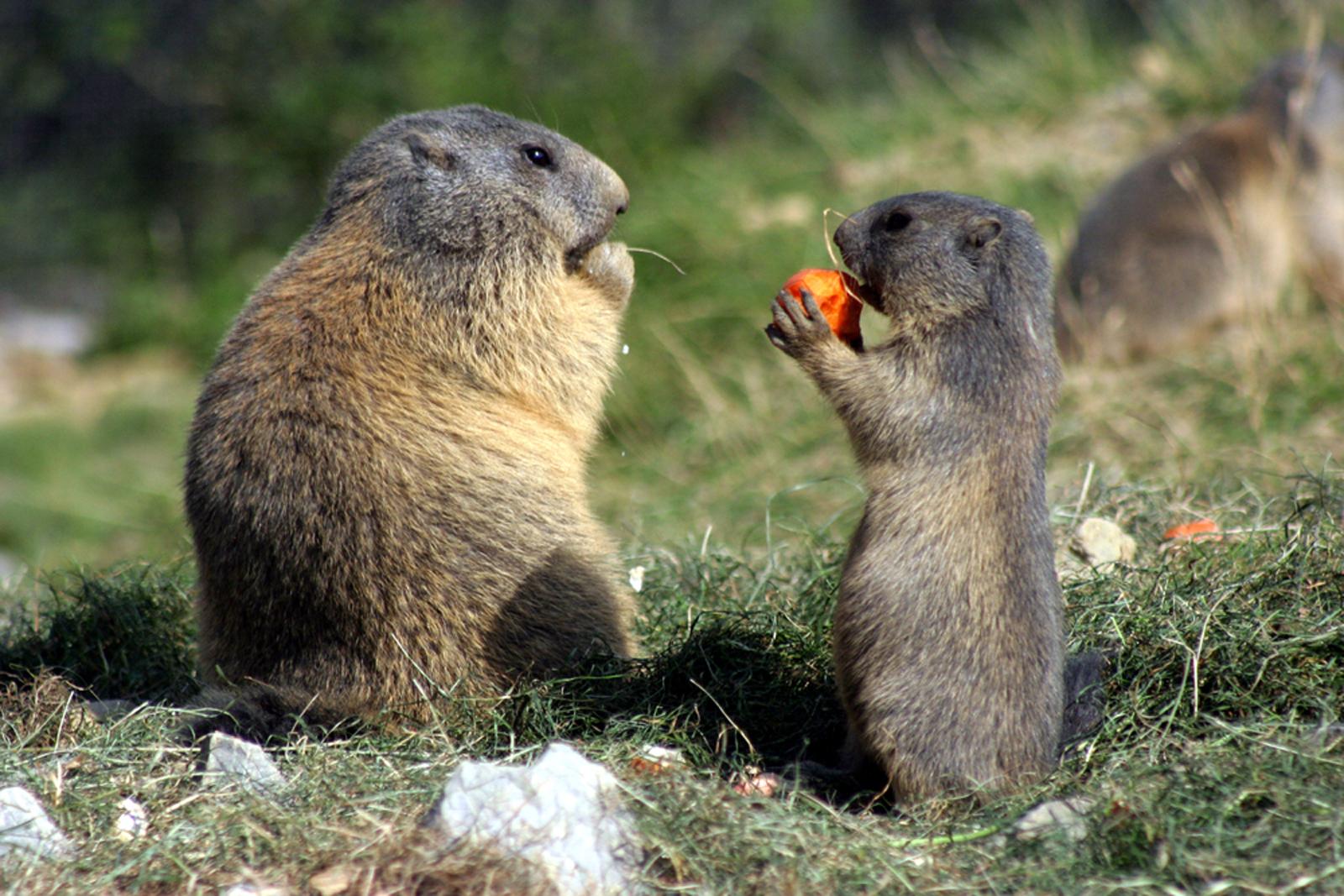 Essenszeit im Wildpark Peter und Paul