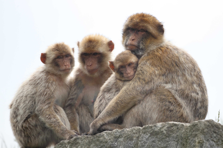 Affenfamilie im Plättli Zoo