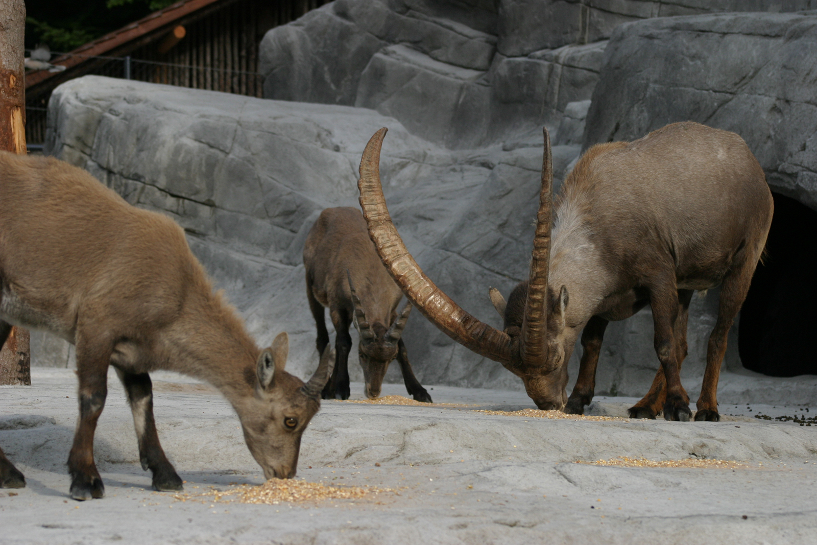Füttern ist erlaubt im Tierpark Peter und Paul