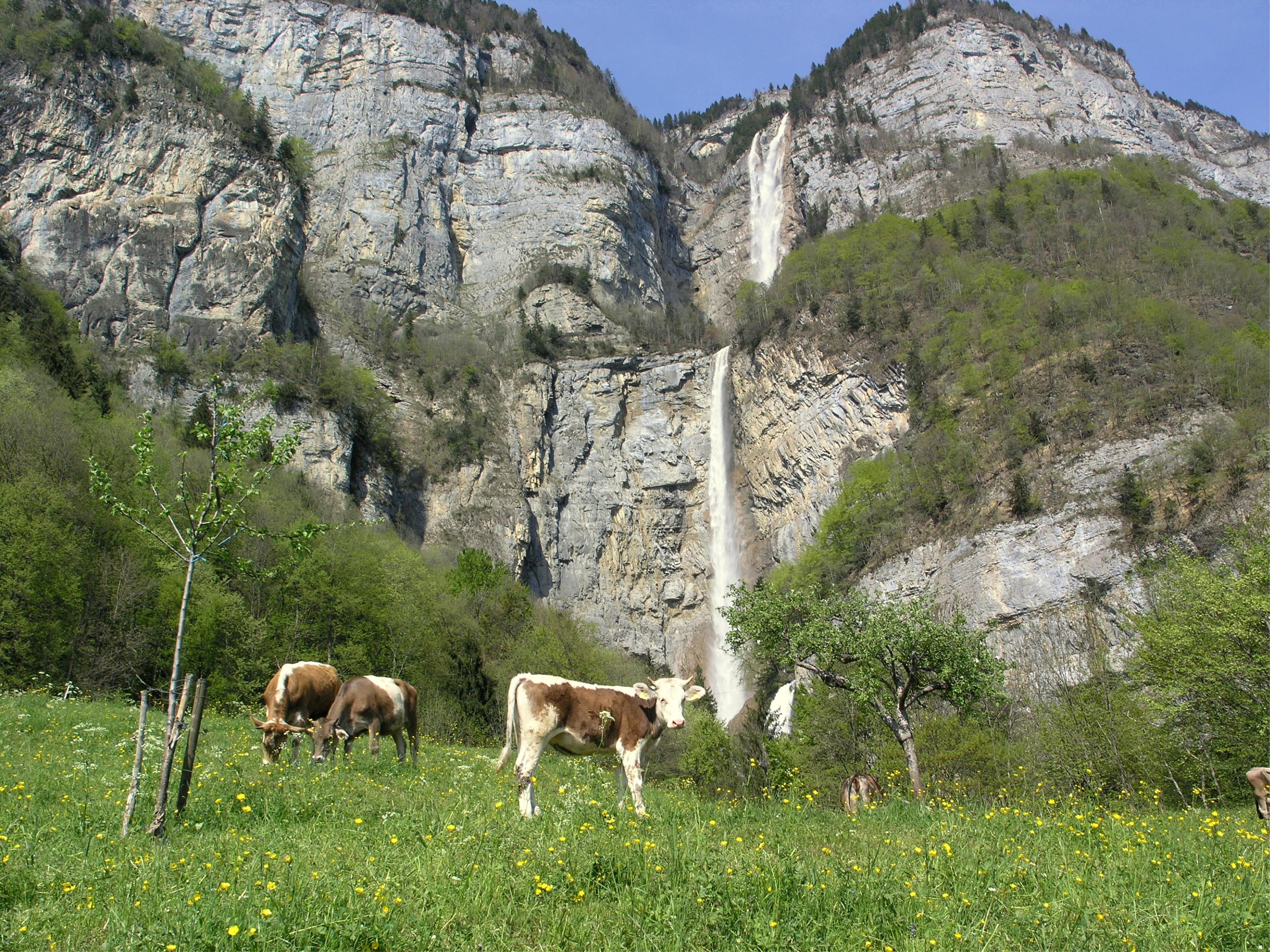 Panorama der Seerenbachfälle