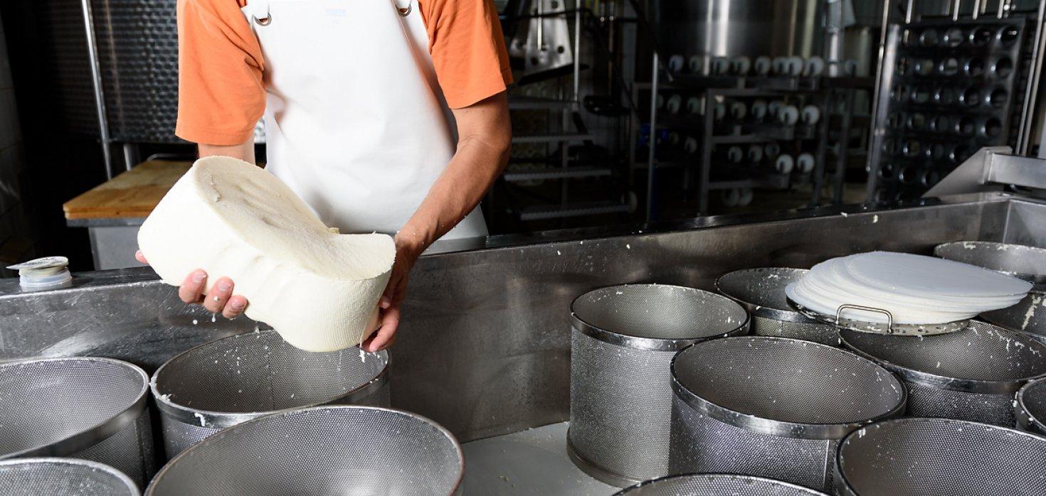 Käseherstellung in der Walliser Schaukäserei Turtmann