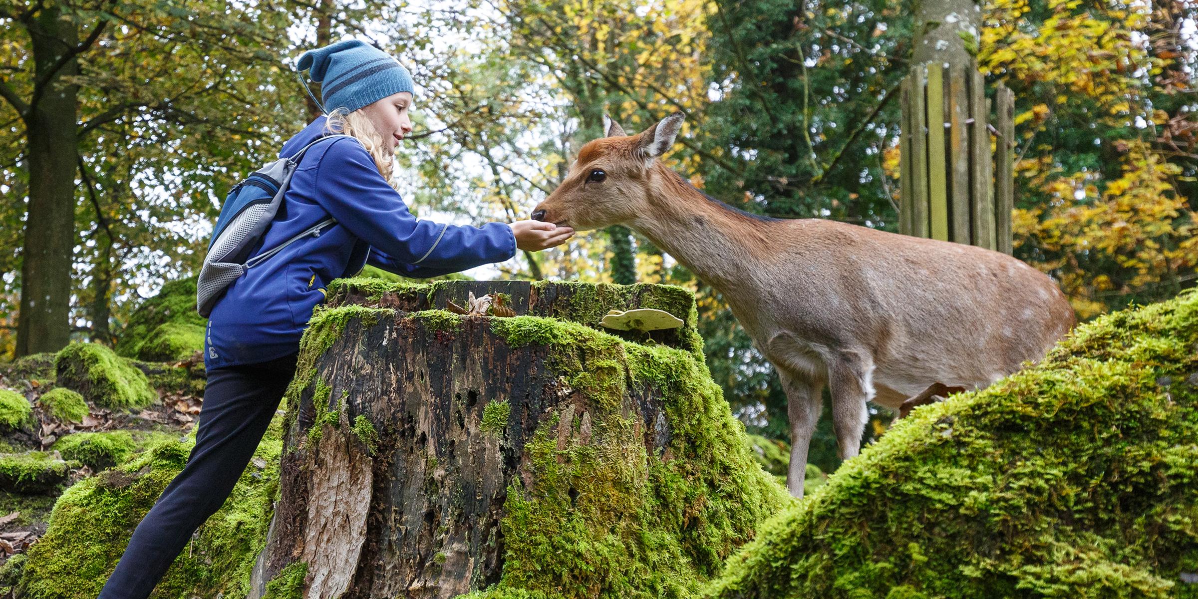 Enger Kontakt mit den Tieren im Natur- und Tierpark Goldau