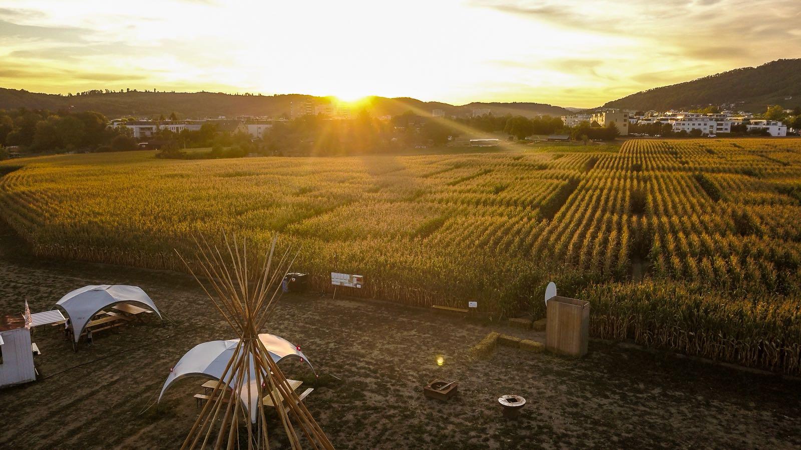 Das Wettinger Maislabyrinth