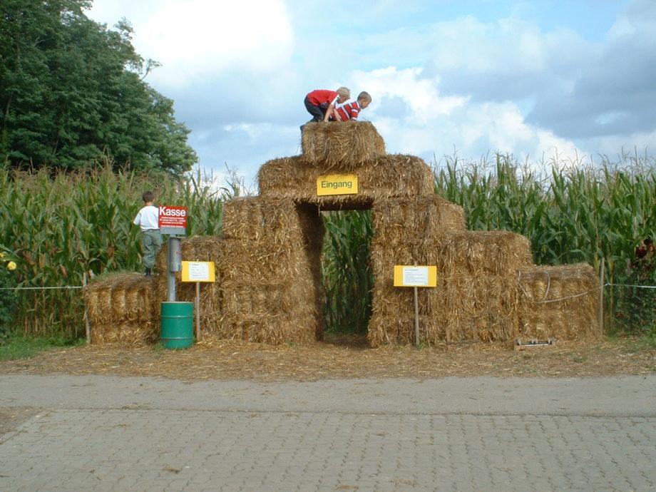 Das Maislabyrinth auf dem Mathishof in Bottmingen