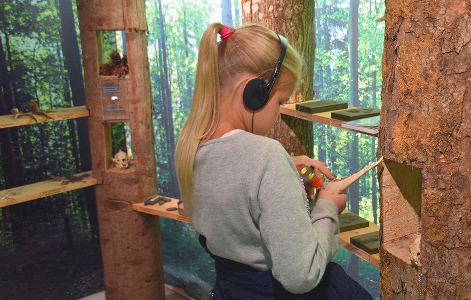 Im Wildnispark Sihlwald gibt es interaktive Stationen