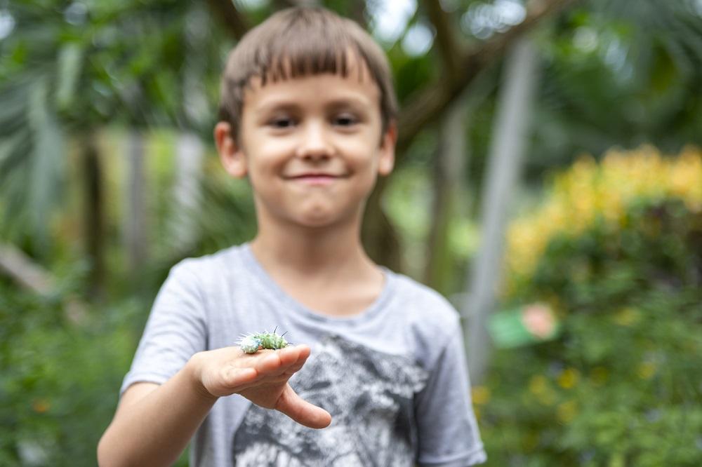 Eine Schmetterlingsraupe zum Anfassen im Papiliorama Kerzers