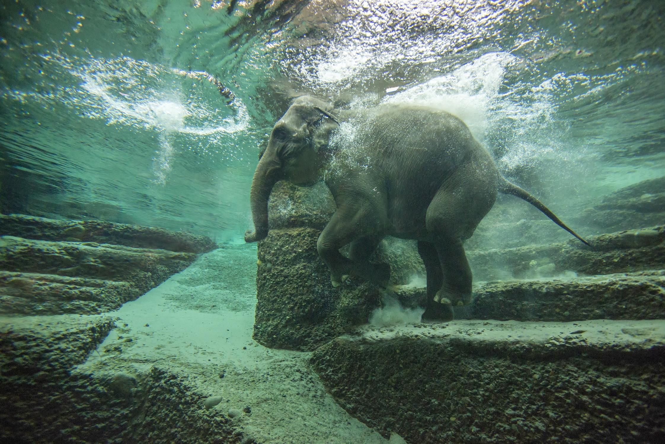 Elefantenbaden im Zoo Zürich