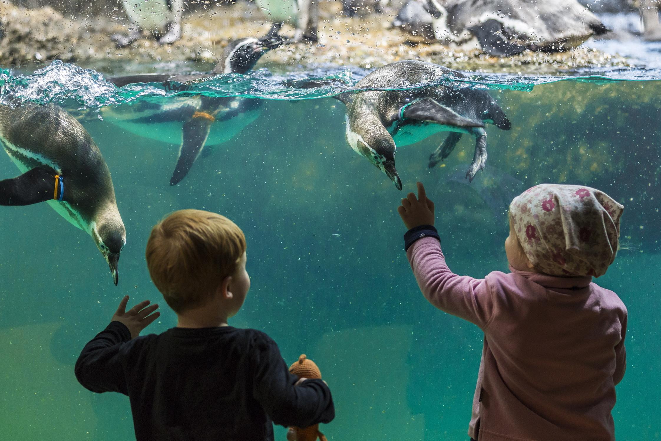 Ein Familienausflug in den Zoo Zürich