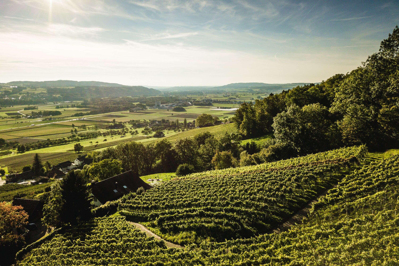 Weinweg Weinfelden