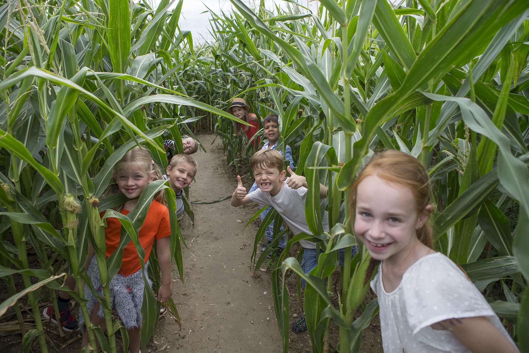 Spannender Rätselspass im Maislabyrinth von Urban Kids