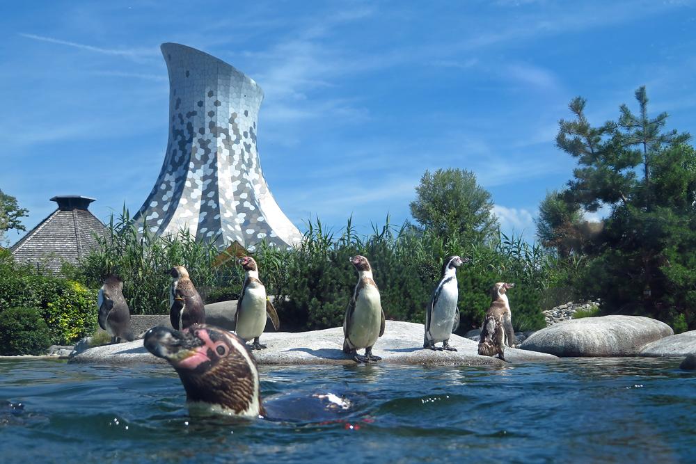 Die neue Pinguinanlage in Knies Kinderzoo Rapperswil